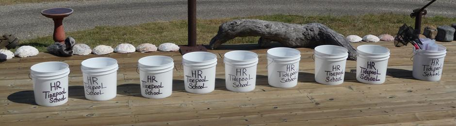Collection buckets for Hollister Ranch Tidepool School